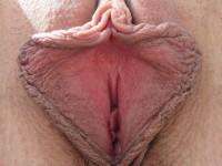 Superbes lèvres écartées de chattes lisses